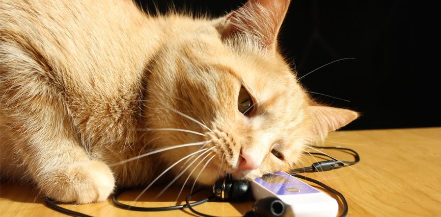 Luisterende kat