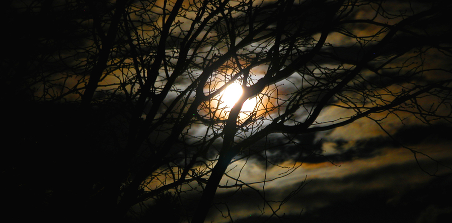 moon behind tree - dark sky