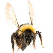 bumblebee 220